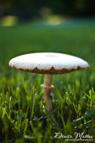 244: Mushroom