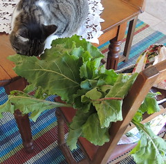 Johnny checking out the Beets from the Farmer's Market Bag