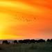 Sunset in Tanzania by jnhPhoto