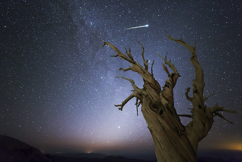Perseid Meteor over an Ancient Bristlecone Pine