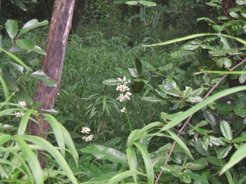 国立科学博物館附属自然教育園 森の中の小さな花