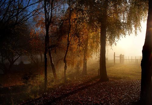 morning mist trees flickrelite publicdomaindedicationcc0 geotagged flickrlover freephotos