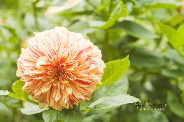 Chubby flower