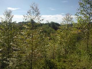 Reforestación Tablemac