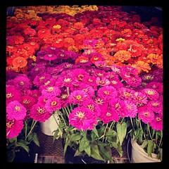 Fresh Flowers! #chattamarket