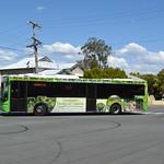 Westside Bus Company Ipswich