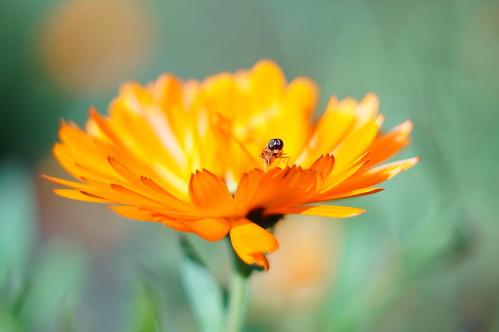 Flower (Helios Test)