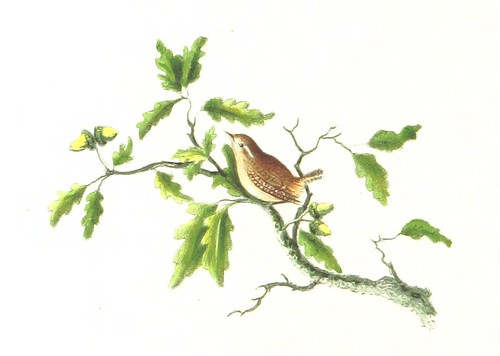 Image taken from page 128 of 'The Poetry of Birds, selected from various authors; with coloured illustrations. By a Lady'