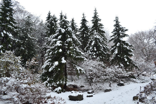Snow falls on the Rock Garden. Photo by Blanca Begert.