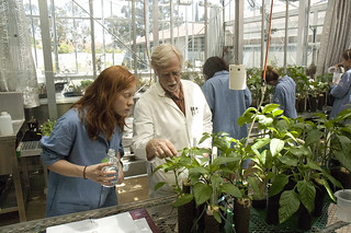 Professor David Becker works with students in the greenhouse of Seaver Biology.