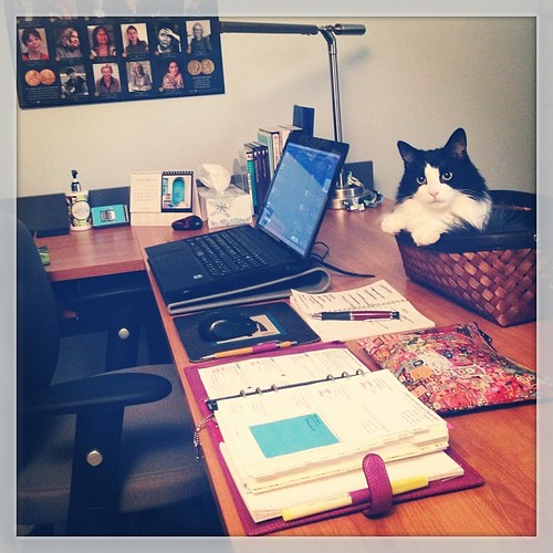 #fmsphotoaday January 24 - Your space #catsofinstagram