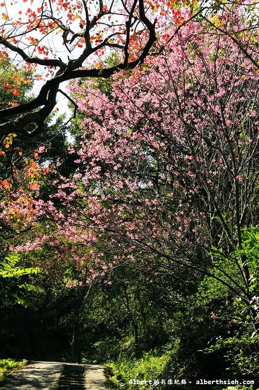 桃園龜山.三聖櫻花園