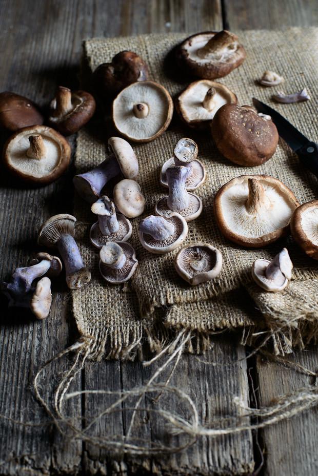 Mushrooms from a farm