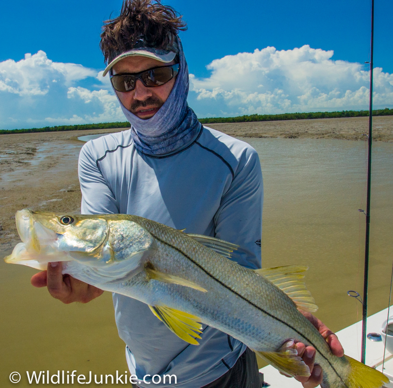 Snook Florida Everglades
