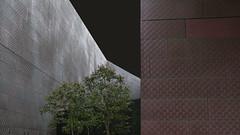 SF: deYoung museum