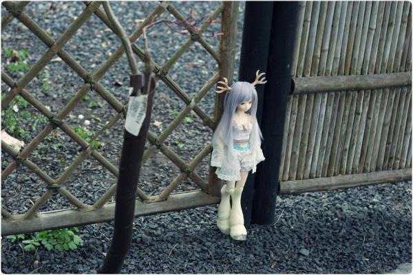 A pretty fence
