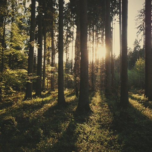 wood trees light sunlight nature forest licht wald iphonography instagram vscocam