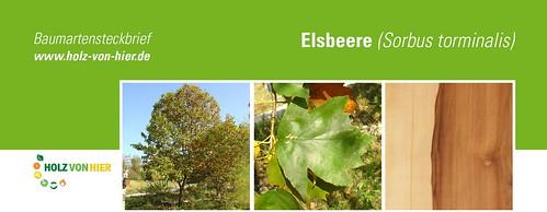 Elsbeere-Header