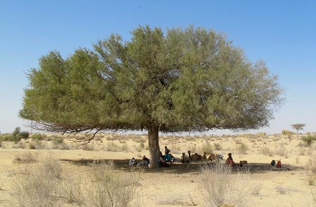 India - Jaisalmer Camel Safari With mystic tours