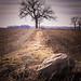 ohio farmland by Dailyville