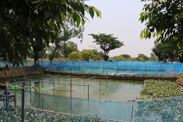 Hatchery, Myanmar. Photo by Toby Johnson, WorldFish.