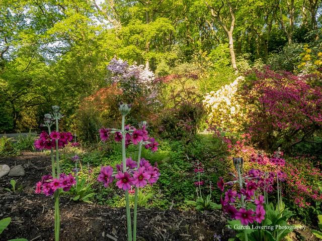 Clyne Gardens 2016 05 13 #18
