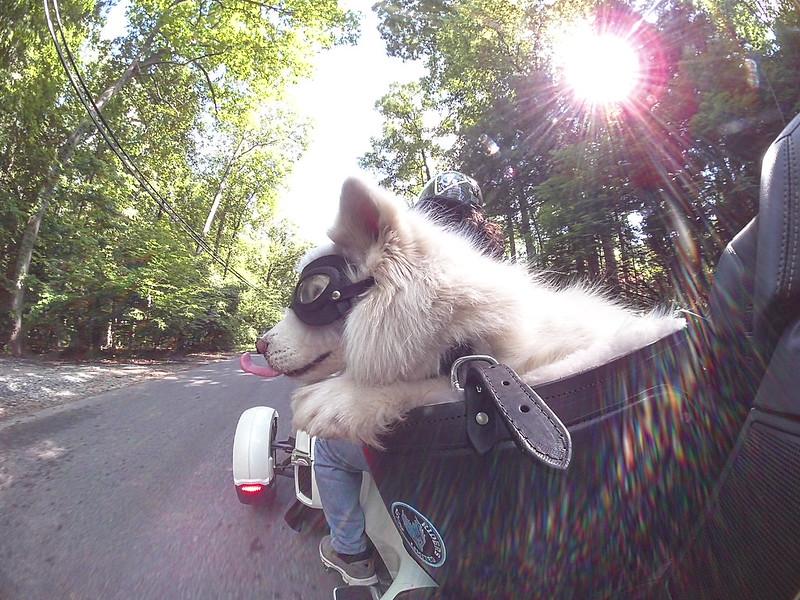 Princess riding the HOG