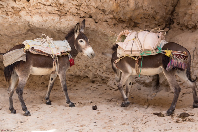 two donkeys... just wandering around...