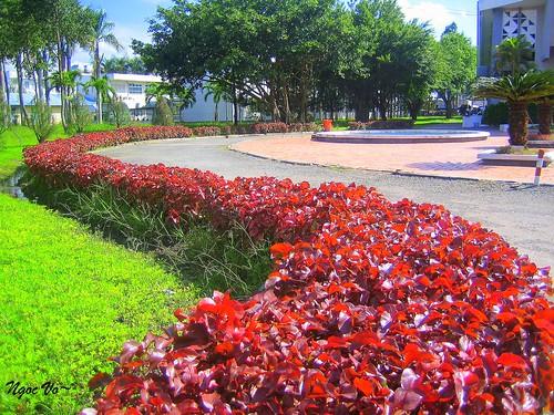 flowers best 500views cầnthơ panoramio546541558907934