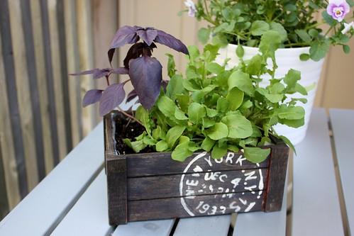 salad-planter