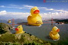 Giant Duck Invasion!!