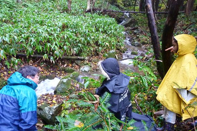 生息地の環境は,水深10〜20センチで,流れの淀むところ.