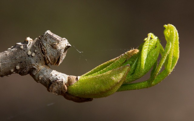 The Begging Claw (f1-20130515-0105)