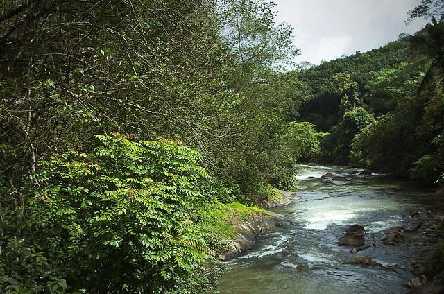 Kerala Forest A Stream Flickr Photo Sharing