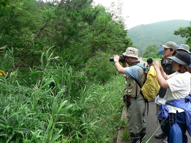 この日はたくさんの種類のトンボやチョウを見ることができた.