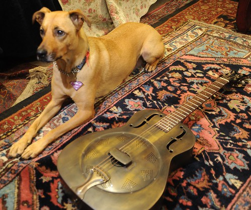 Rosie the Super-Wonder-Dog poses with a Dean Dobro guitar entirely made of metal, Persian rug, Seattle, Washington, USA by Wonderlane