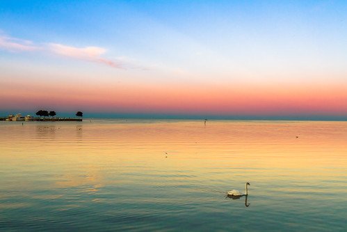 sunset red orange water swan purple unitedstates michigan lakestclair saintclairshores f1crazed