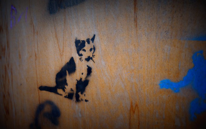 Istanbul's Stray Cats in Photos