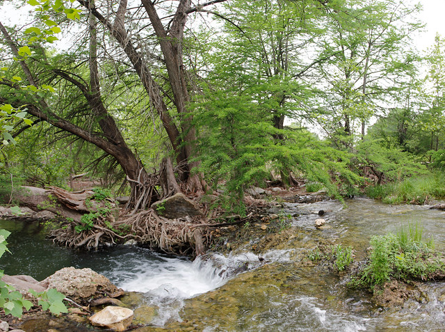 River flowing around trees