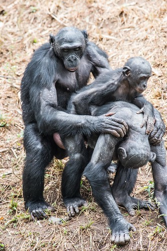 Conjugal pileup with junior in the middle_SR