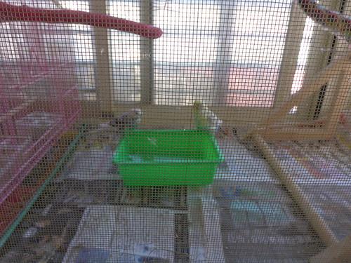 鳥寶們的浴缸