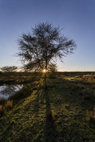 sunrise southafrica wetlands mpumalanga lydenburg wetlandssunrise kuduranch kuduprivatenaturereserve kudugameranch wetlandshut