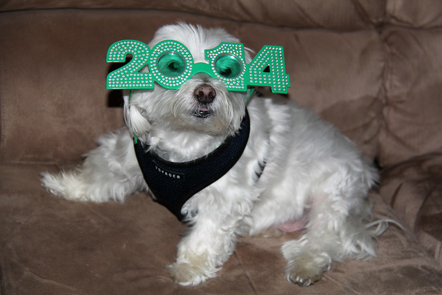 Picture Of Lucky The Maltese Dog Decided To Wear His 2014