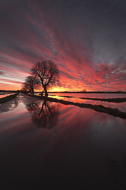 peter spencer - Sunrise Somerset Levels
