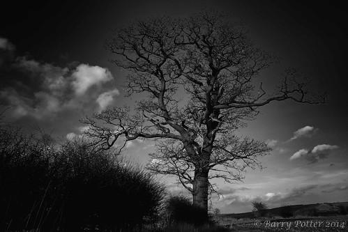 landscape blackwhite fuji eastyorkshire barrypotter yabbadabbadoo eastridingofyorkshire barrypotternet edenmedia barrypotteredenmedia fujiex2