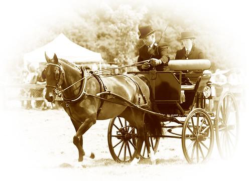 Hackney Horse3