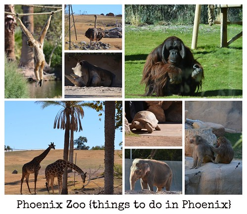 Phoenix Zoo collage