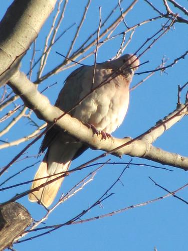 Birds 14