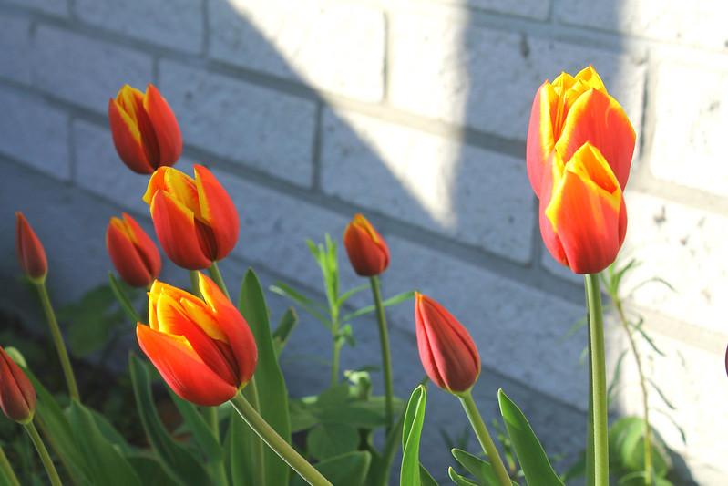 Kevät 020
