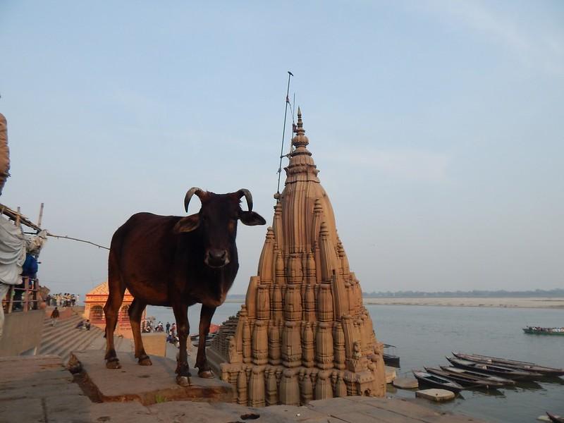 150122 Varanasi (52) (2304 x 1728)